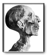Profile of the mummy of Ramesses II