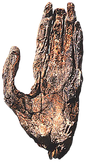 The mummified left hand of Neferefre is among the few remains found in his pyramid.